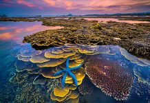 Du lịch Phú Yên: Những kinh nghiệm cần có trước chuyến đi của bạn